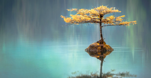 Reflection of a tree over water symbolizing the reflection of reality within a still and relaxed mind